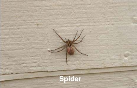 10-spider.jpg