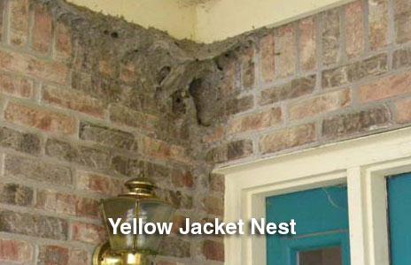 11-yellow_jacket_nest.jpg