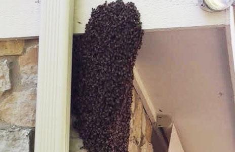 17-honey_bees.jpg