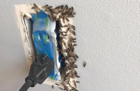 7.6-termite_swarmers.jpg